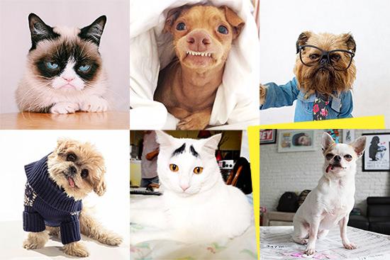 I Profili Dei 5 Cani E Gatti Più Famosi Di Instagram Marnie Gue