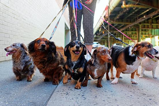 app_cani_dog_walk_purina_proplan