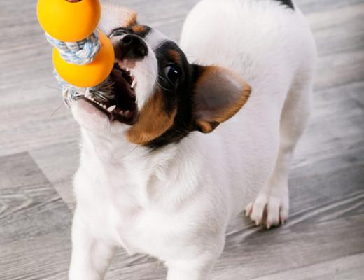 cucciolo_che_gioca
