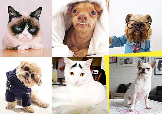 profili_instagram_animali_famosi