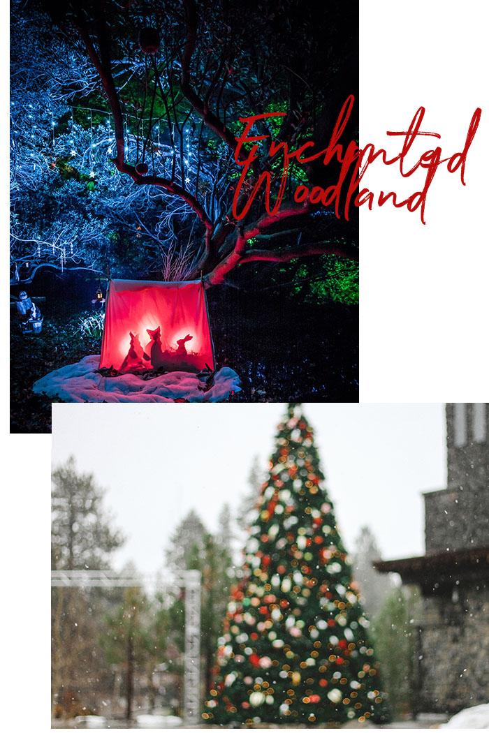 enchanted-woodland-londra